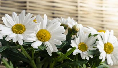 Blumen, Hintergrund