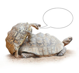 Love making turtles couple with speech bubble.