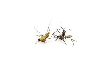 Dead mosquito lie-down