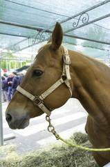 Horse closeup. Color image