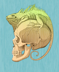 colorfull  iguana and scull