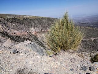 Reserva National Salinas y Aguada Blanca, Peru