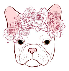 cute muzzle French Bulldog with a wreath of roses