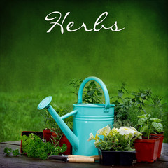 Blue watering garden can and Herbs