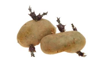 Two seed potatoes
