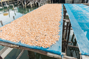 Group of  dried salted prawn on the fisherman net