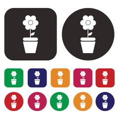 Macro icon / Photography icon / Flower