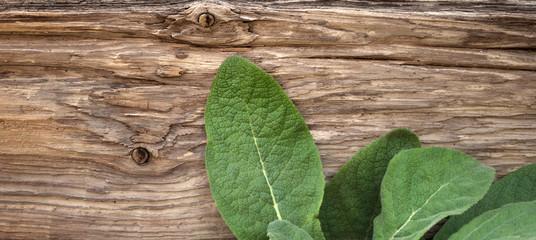Blätter von Königskerze vor altem Treibholz Brett 2