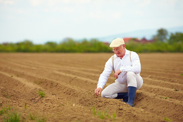 mature man, farmer on arable field, checking the plant growth