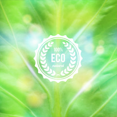 Green eco design concept  with abstract  leaf texture and label