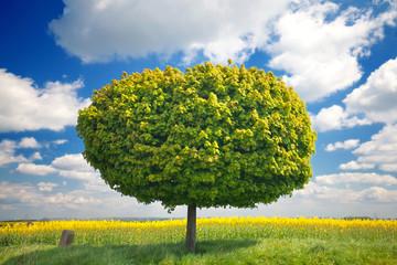 einsamer Baum auf einer Wiese