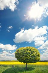 kugelrunder Baum