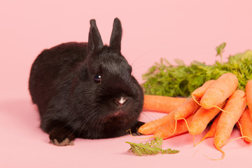 Rabbit with fresh carrots