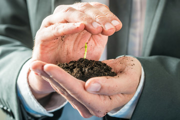 Businessman holding a sprouting seedling