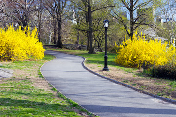 Path Through Central Park in New York City