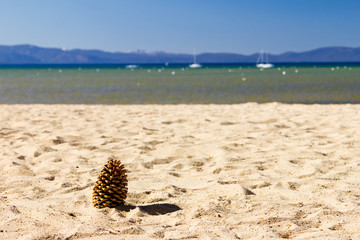 Pine Cone on Empty Beach Landscape
