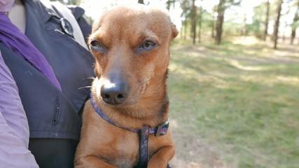 Little terrier