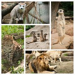 composition animaux sauvage en captivité
