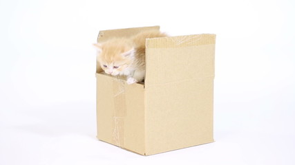 Red Kitty  in a Gift Box