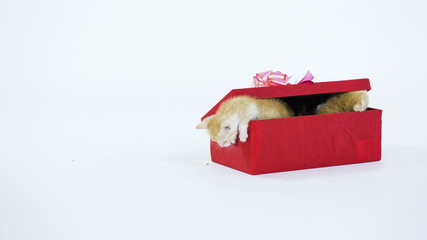 Five Kitty  in a Gift Box