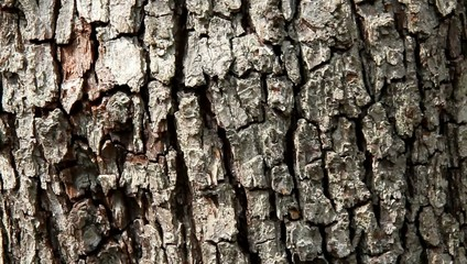 Close up of pear tree bark