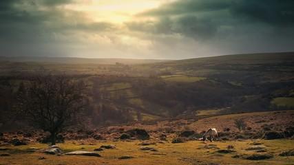 Stunning Rural Landscape Vista With Horses