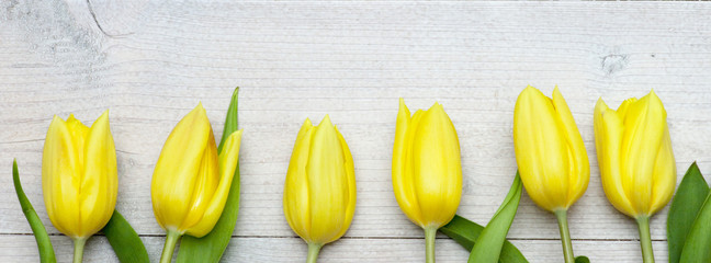 A row of tulips on white wooden background