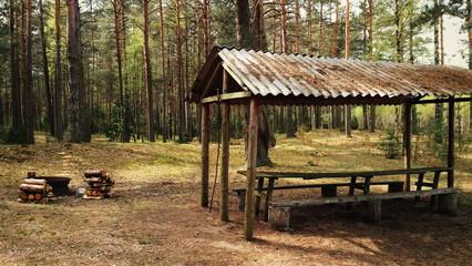 Загородный отдых в лесу