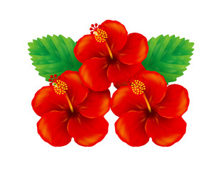 Illustration of red hibiscus. / White background.