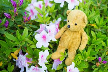 ツツジの花とテディーベアー