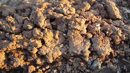 Clay lumps