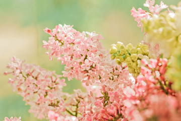 spring flowers, abstract soft floral background
