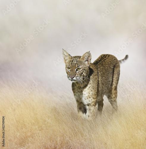 Bobcat - 82749404