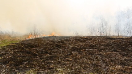 The fire in the field, burns a grass