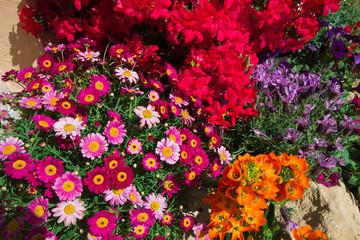 Decorazione floreale per la festa dei fiori a Camerino