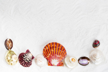 seashells on the white sand for background