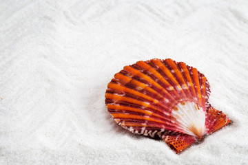 sea shells with white sand as background