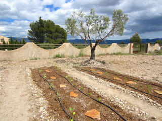 ecological vegetable plot