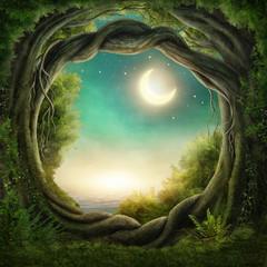 Enchanted dark forest