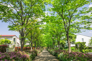 新緑の住宅街