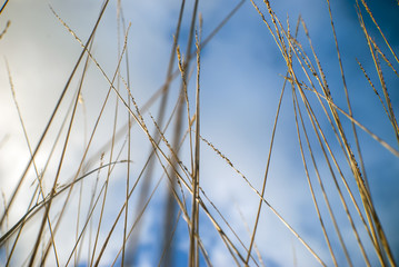 cloudy blue sky background behind grasses