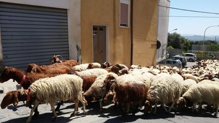 Mare di pecore