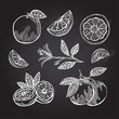 hand drawn grapefruits - 82786281
