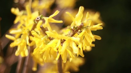 yellow flowers bloom in spring isolated