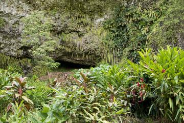 ワイルア川州立公園内のシダの洞窟