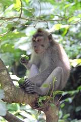 Affe beim Essen