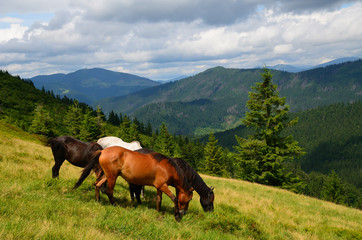 Grazing four mountain horses