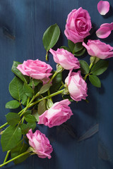 pink rose flowers over dark blue background