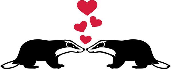 Badgers in love