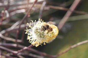 Bestäubung einer Pflanze durch Insekt